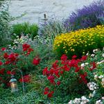 Squantum gardens